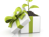 Give Green – Sustainable Gift Ideas for all Occasions